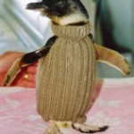 pinguinmitpulh7sd32cfbm